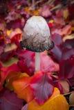 Paddestoel met Kleurrijk Autumn Leaves Stock Afbeeldingen
