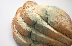 Paddestoel op brood stock afbeeldingen