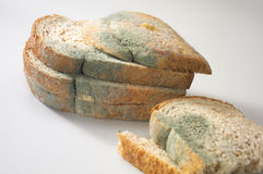 Paddestoel op brood stock foto
