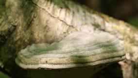 paddestoel op de boom stock videobeelden