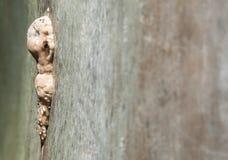 Paddestoel op een boomboomstam Stock Fotografie