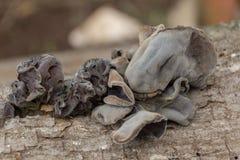 Paddestoel op een boomstomp stock foto