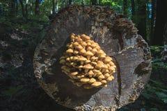 Paddestoel op gesneden hout royalty-vrije stock afbeeldingen