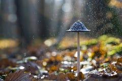 Paddestoel in regen stock afbeeldingen