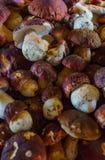 Paddestoelboleet over Houten Achtergrond Autumn Cep Mushrooms Kokende heerlijke organische paddestoel Gastronomisch voedsel stock fotografie