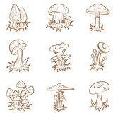Paddestoelen stock illustratie