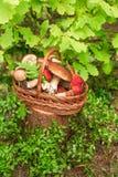 Paddestoelen in boskaart op de herfst of zomer Bosoogstboleet, esp, cantharellen, bladeren, knoppen, bessen, Hoogste mening stock afbeelding