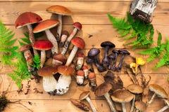 Paddestoelen in boskaart op de herfst of zomer Bosoogstboleet, esp, cantharellen, bladeren, knoppen, bessen, Hoogste mening stock foto