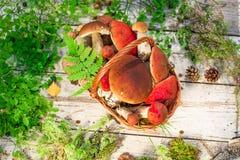 Paddestoelen in boskaart op de herfst of zomer Bosoogstboleet, esp, cantharellen, bladeren, knoppen, bessen, Hoogste mening stock fotografie