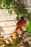 Paddestoelen in boskaart op de herfst of zomer Bosoogstboleet, esp, cantharellen, bladeren, knoppen, bessen, Hoogste mening royalty-vrije stock fotografie