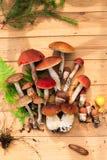 Paddestoelen in boskaart op de herfst of zomer Bosoogstboleet, esp, cantharellen, bladeren, knoppen, bessen, Hoogste mening royalty-vrije stock foto