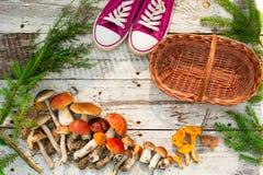 Paddestoelen in boskaart op de herfst of zomer Bosoogstboleet, esp, cantharellen, bladeren, knoppen, bessen, Hoogste mening royalty-vrije stock afbeelding