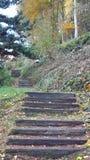 Paddestoelen in de herfst stock foto's