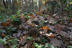 Paddestoelen in de herfstbos 01 royalty-vrije stock fotografie