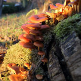 Paddestoelen in de warme winter Stock Foto