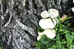 Paddestoelen door boom Stock Foto's