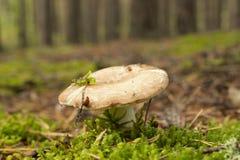 Paddestoelen in het bos stock foto's