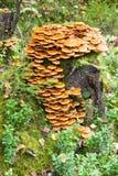 Paddestoelen in het bos Royalty-vrije Stock Afbeelding