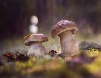 Paddestoelen in het bos Stock Afbeeldingen