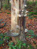 Paddestoelen op boom Stock Foto's