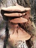 Paddestoelen of paddestoel op een boom royalty-vrije stock fotografie