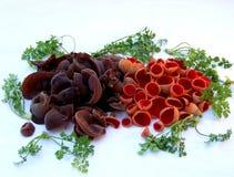 Paddestoelstilleven met bruine en rode paddestoelen Stock Foto