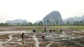 Paddies with vietnamese workers stock footage
