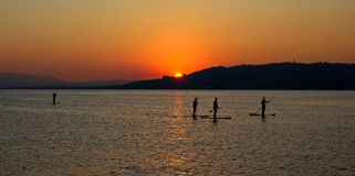 Paddla segelbrädor hem silhouetted i solnedgången Arkivfoton