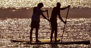 Paddle Boarders. Paddle Boarding at sunset Poole Harbour UK stock photo