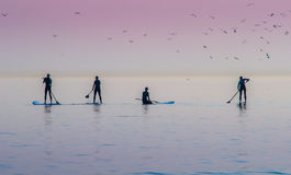 Paddle Boarders Stock Photos