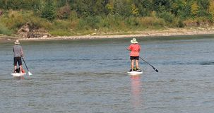 Paddle Boarders On The North Saskatchewan River. Paddle boarders on the North Saskatchewan, Edmonton Alberta in summertime stock images