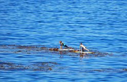 Paddle boarders off  Heisler Park, Laguna Beach, California. Stock Images
