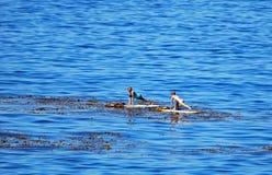 Paddle boarders off  Heisler Park, Laguna Beach, California. Stock Images
