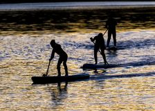 Paddle Boarders. Royalty Free Stock Images