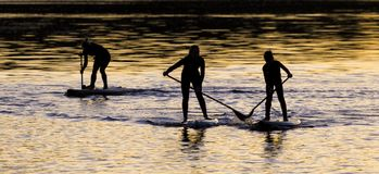 Paddle Boarders. Royalty Free Stock Photography