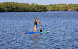 Paddle boarding expert. Attractive female paddle boarding near Singer Island, Florida Stock Photos