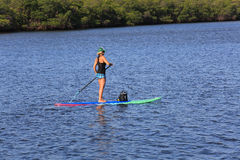 Paddle boarding expert. Attractive female paddle boarding near Singer Island, Florida Royalty Free Stock Image