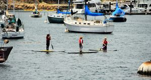 Paddle Boarding in the Monterey Marina Royalty Free Stock Photography