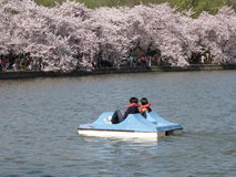 Paddle Boating the Tidal Basin Stock Photography
