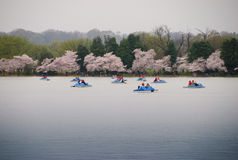 Free Paddle Boats On The Tidal Basin With Cherry Blossoms Stock Images - 77225714