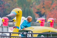 Paddle boats at Ueno park in Autumn Royalty Free Stock Image