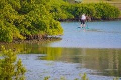 Paddle intern w Floryda na śródlądowej drodze wodnej przy niskim przypływem obraz stock