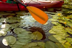 Paddle of kayak in water with water lilies.  royalty free stock photos