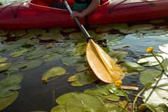 Paddle of kayak in water with water lilies.  stock photos