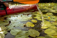 Paddle of kayak in water with water lilies.  royalty free stock photo