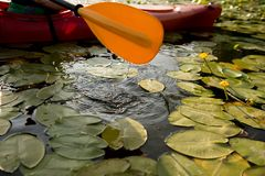Paddle of kayak in water with water lilies.  stock photography