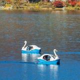 Paddle łodzie przy Jeziornym Kawaguchiko w jesieni Obraz Stock