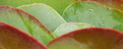 Paddle plant Royalty Free Stock Photos