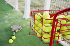 Paddle tennis objects Royalty Free Stock Photo