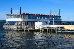 Paddle wheeler on lake with flock of ducks royalty free stock images